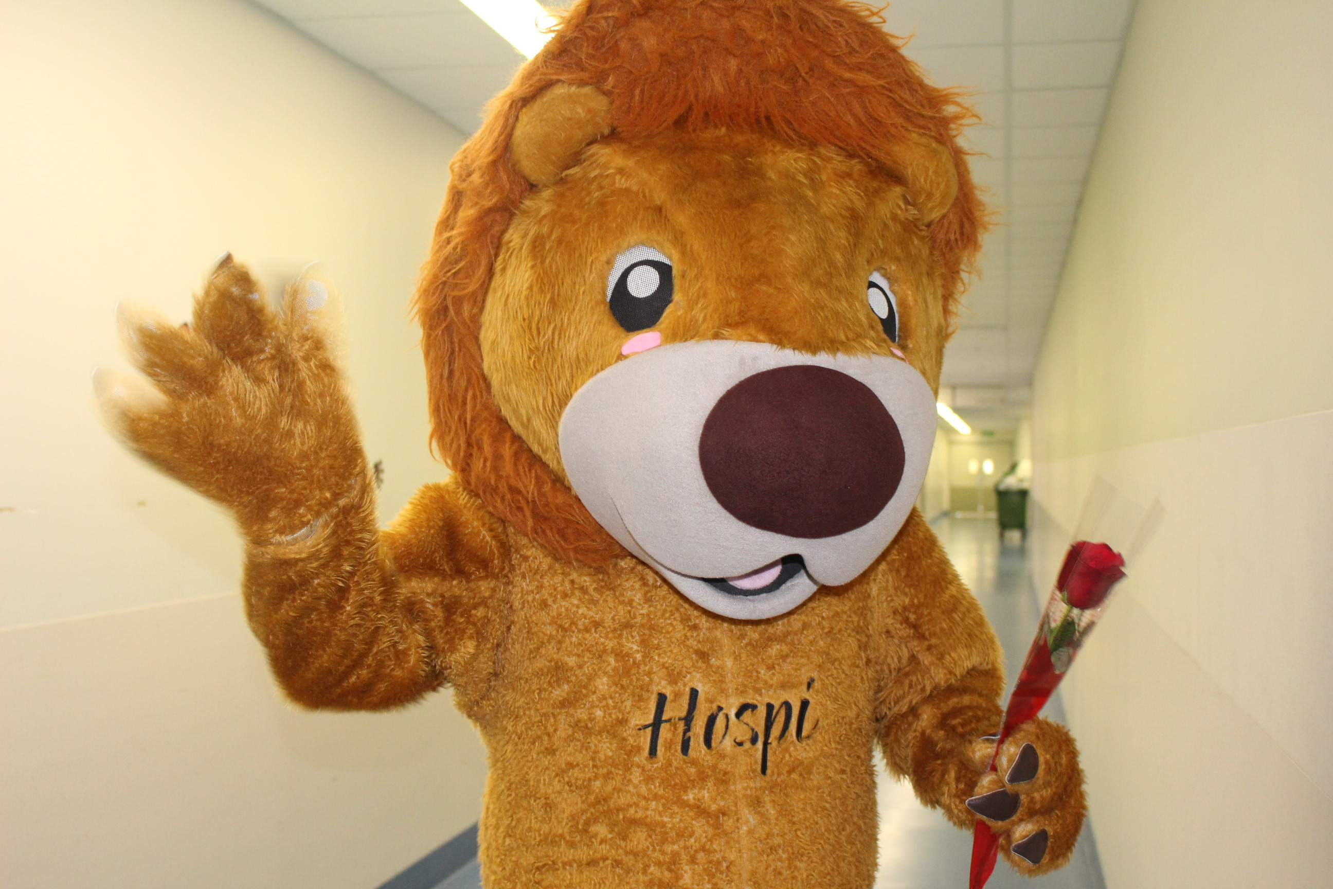 Children's Hospital mascot Hospi delivers roses on Valentines Day